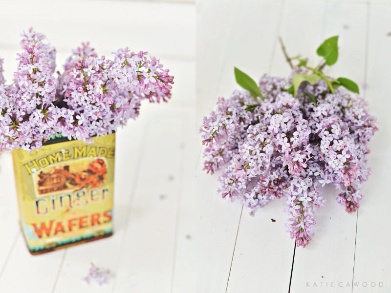LILAC DIPTYCH | Katie Cawood Photography